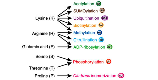 Aflatoxins metabolism, effects on epigenetic mechanisms and